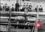 Image of Bucking Bronco West Orange New Jersey USA, 1894, second 14 stock footage video 65675071499