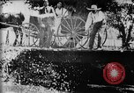 Image of Fisherman Fanwood New Jersey USA, 1896, second 35 stock footage video 65675071513
