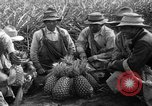 Image of pineapples Hawaii USA, 1916, second 2 stock footage video 65675071573