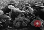 Image of pineapples Hawaii USA, 1916, second 15 stock footage video 65675071573