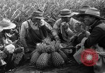 Image of pineapples Hawaii USA, 1916, second 17 stock footage video 65675071573