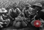 Image of pineapples Hawaii USA, 1916, second 19 stock footage video 65675071573
