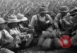 Image of pineapples Hawaii USA, 1916, second 24 stock footage video 65675071573