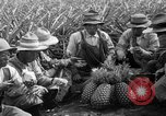 Image of pineapples Hawaii USA, 1916, second 25 stock footage video 65675071573