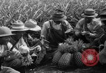 Image of pineapples Hawaii USA, 1916, second 28 stock footage video 65675071573