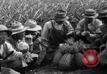 Image of pineapples Hawaii USA, 1916, second 31 stock footage video 65675071573