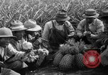 Image of pineapples Hawaii USA, 1916, second 32 stock footage video 65675071573