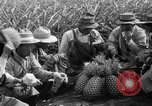 Image of pineapples Hawaii USA, 1916, second 33 stock footage video 65675071573