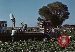 Image of Hoover Dam United States USA, 1962, second 12 stock footage video 65675071610