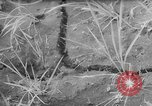 Image of drought Japan, 1958, second 15 stock footage video 65675071621