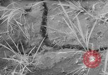 Image of drought Japan, 1958, second 16 stock footage video 65675071621