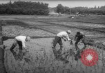 Image of drought Japan, 1958, second 23 stock footage video 65675071621