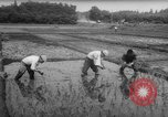 Image of drought Japan, 1958, second 24 stock footage video 65675071621