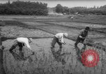 Image of drought Japan, 1958, second 25 stock footage video 65675071621