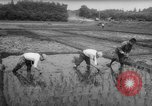 Image of drought Japan, 1958, second 26 stock footage video 65675071621