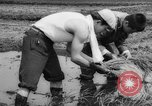 Image of drought Japan, 1958, second 27 stock footage video 65675071621