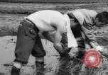 Image of drought Japan, 1958, second 28 stock footage video 65675071621