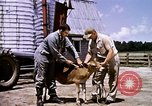 Image of agriculture United States USA, 1956, second 62 stock footage video 65675071650