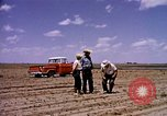 Image of agriculture United States USA, 1956, second 4 stock footage video 65675071651