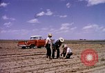 Image of agriculture United States USA, 1956, second 7 stock footage video 65675071651