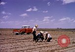 Image of agriculture United States USA, 1956, second 9 stock footage video 65675071651