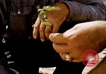 Image of agriculture United States USA, 1956, second 19 stock footage video 65675071651