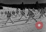 Image of weasel United States USA, 1943, second 41 stock footage video 65675071681