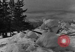 Image of weasel United States USA, 1943, second 44 stock footage video 65675071681