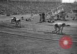 Image of Relay race in 1936 Olympics Berlin Germany, 1936, second 58 stock footage video 65675071686