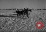 Image of reindeer race Russia, 1962, second 24 stock footage video 65675071769