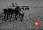 Image of reindeer race Russia, 1962, second 25 stock footage video 65675071769