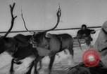 Image of reindeer race Russia, 1962, second 26 stock footage video 65675071769