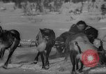 Image of reindeer race Russia, 1962, second 41 stock footage video 65675071769