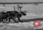 Image of reindeer race Russia, 1962, second 48 stock footage video 65675071769