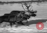 Image of reindeer race Russia, 1962, second 49 stock footage video 65675071769