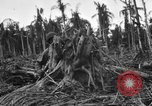 Image of 158th Infantry 2nd Battalion Arawe New Britain Papua New Guinea, 1943, second 34 stock footage video 65675071779