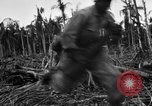 Image of 158th Infantry 2nd Battalion Arawe New Britain Papua New Guinea, 1943, second 39 stock footage video 65675071779
