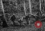 Image of 158th Infantry 2nd Battalion Arawe New Britain Papua New Guinea, 1943, second 27 stock footage video 65675071780