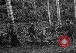 Image of 158th Infantry 2nd Battalion Arawe New Britain Papua New Guinea, 1943, second 28 stock footage video 65675071780