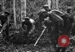 Image of 158th Infantry 2nd Battalion Arawe New Britain Papua New Guinea, 1943, second 32 stock footage video 65675071780