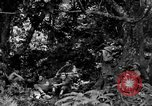 Image of communication activities Peleliu Palau Islands, 1945, second 3 stock footage video 65675071792