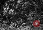 Image of communication activities Peleliu Palau Islands, 1945, second 9 stock footage video 65675071792