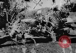 Image of OSS interrogate Japanese Burma, 1944, second 1 stock footage video 65675072042
