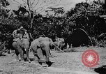 Image of OSS interrogate Japanese Burma, 1944, second 10 stock footage video 65675072042