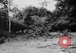 Image of OSS interrogate Japanese Burma, 1944, second 36 stock footage video 65675072042