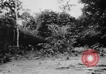 Image of OSS interrogate Japanese Burma, 1944, second 39 stock footage video 65675072042