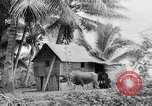 Image of Chamorro natives Guam, 1939, second 39 stock footage video 65675072054
