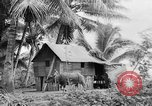 Image of Chamorro natives Guam, 1939, second 40 stock footage video 65675072054