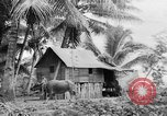 Image of Chamorro natives Guam, 1939, second 41 stock footage video 65675072054