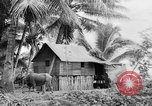 Image of Chamorro natives Guam, 1939, second 42 stock footage video 65675072054